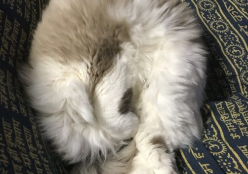 ふんわり猫